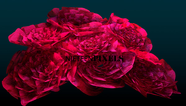 3D roses bouquet by nineteenpixels