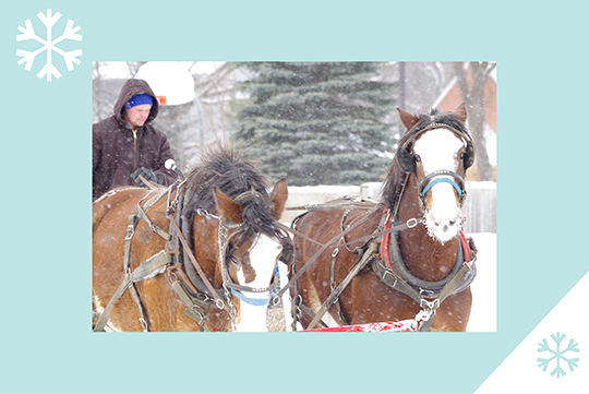Horses in the winter on a blue background with snowflakes