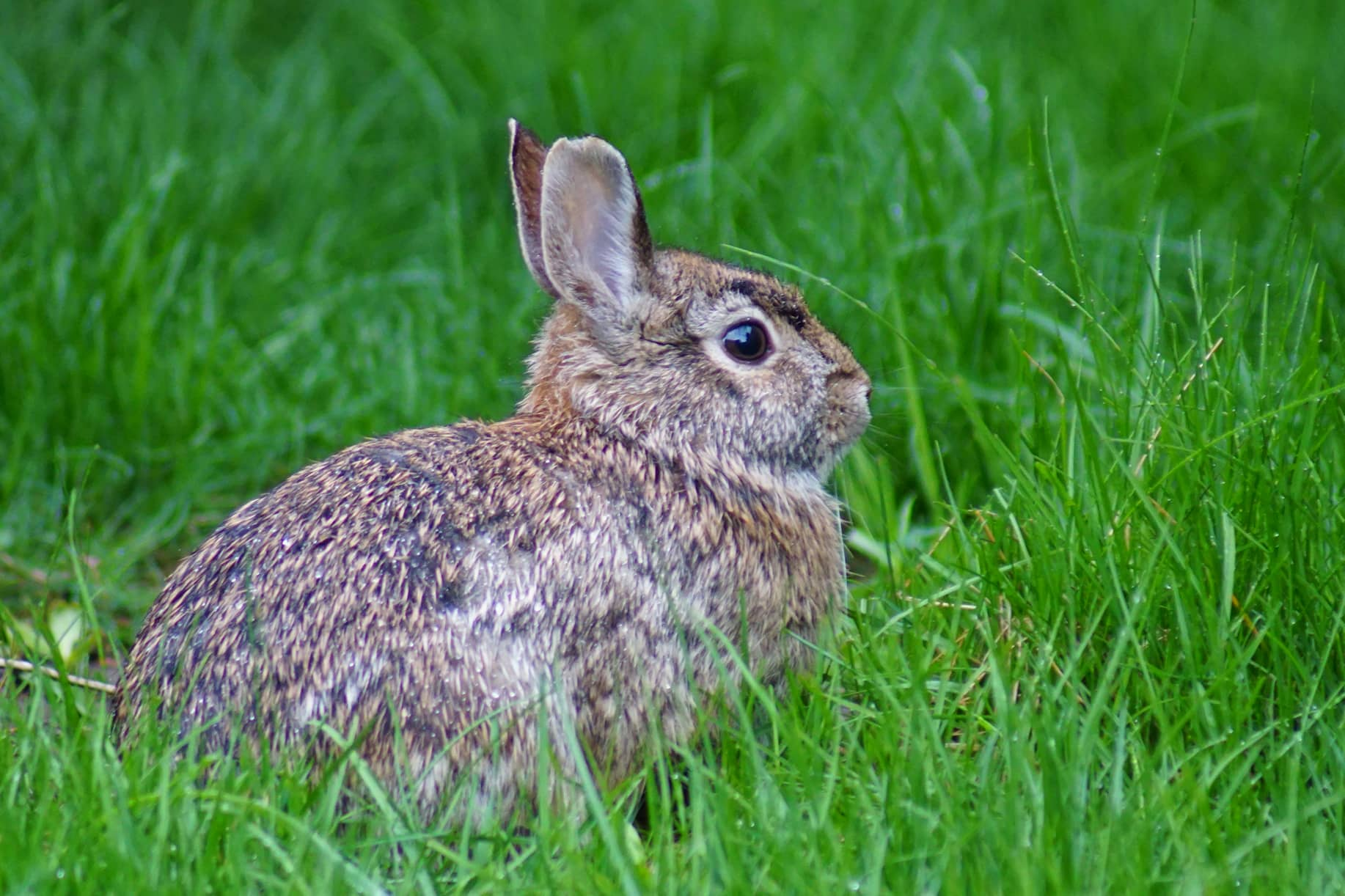 Rabbit in some grass