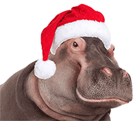 Hippo Wearing a Santa Hat