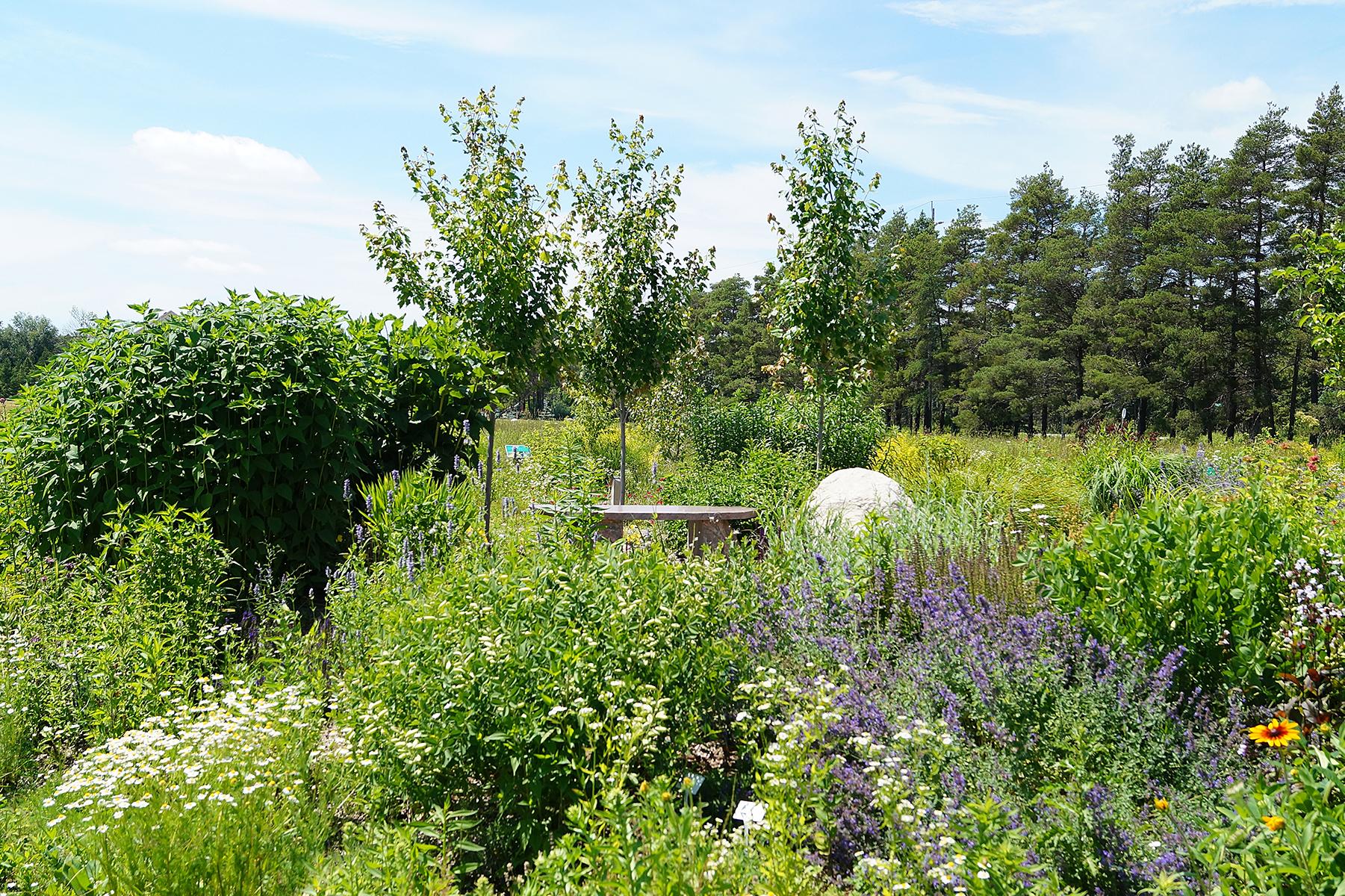 Mono Pollinator Garden