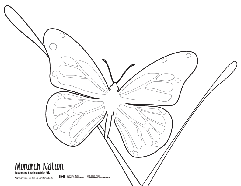 Butterfly Colouring Sheet Outline