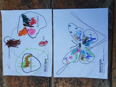 Butterfly and butterfly lifecycle sheets completed by a 3 year old