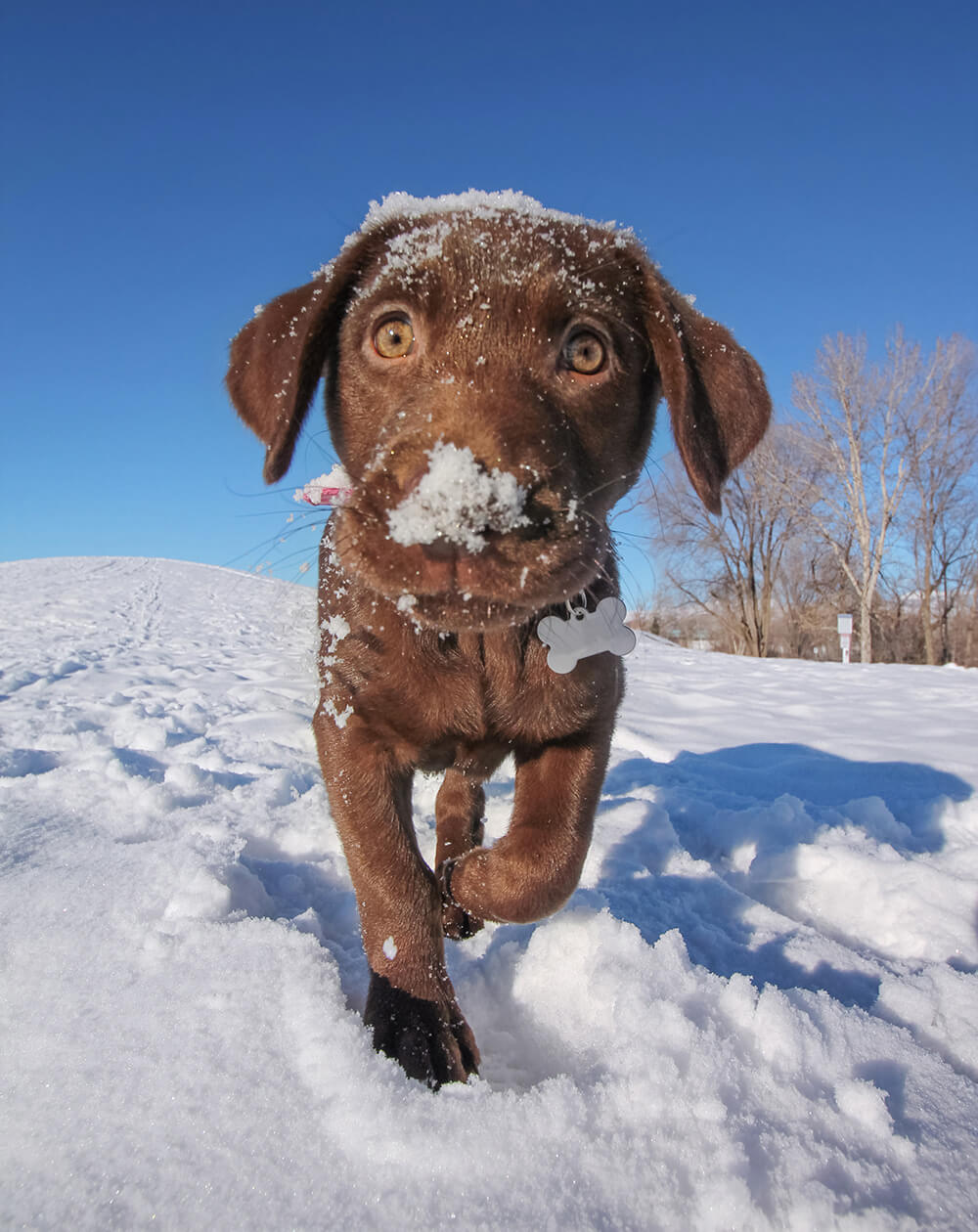 Puppy in snow wearing dog tag