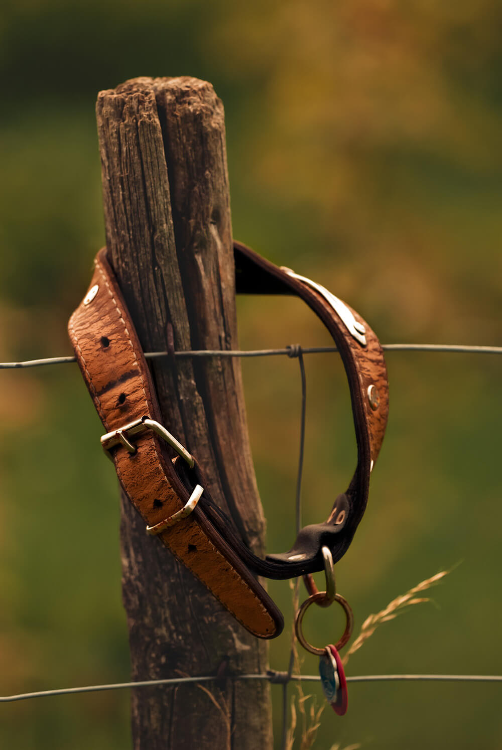 Dog collar on wire fence post