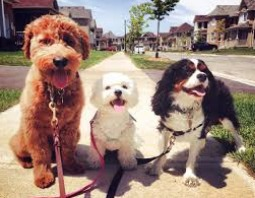 Best Dog walkers in San Jose