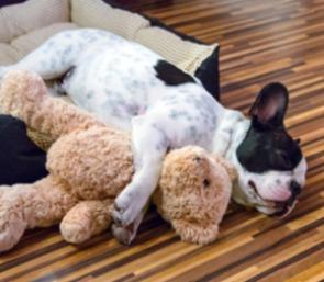 Doggie day care in San Jose