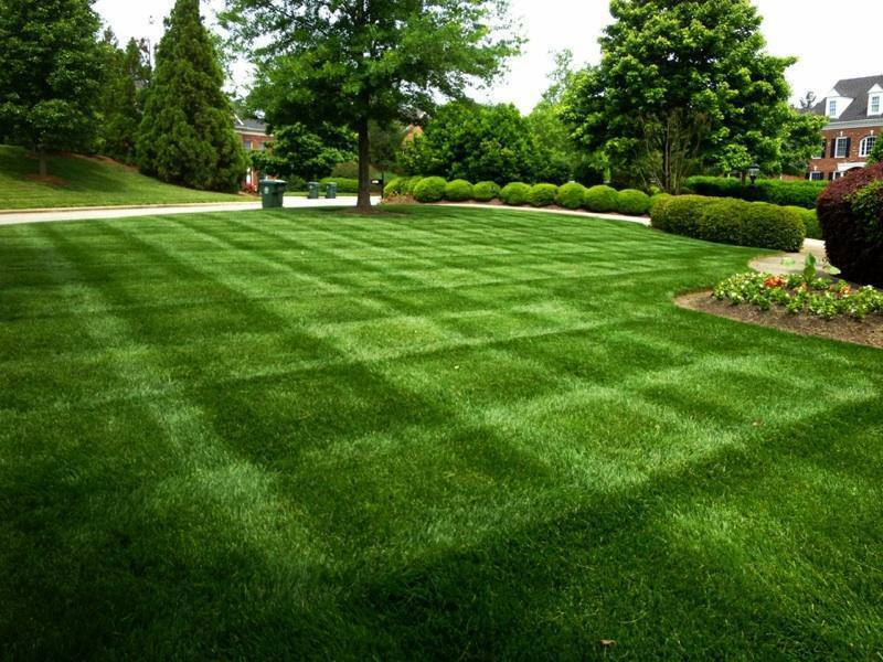 Lawn Overseeding Services In Spartanburg & Greenville, SC