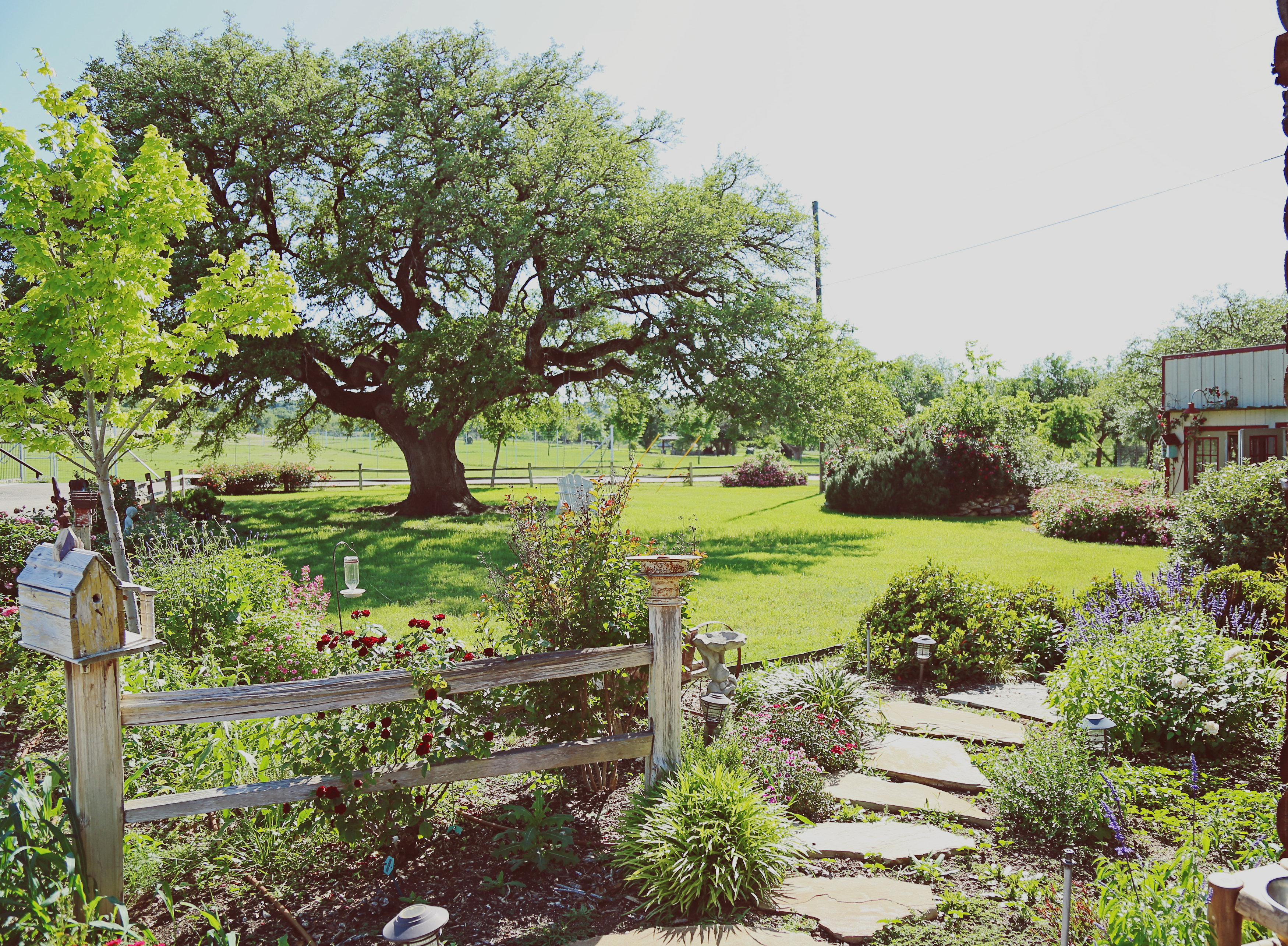 view of yard and garden