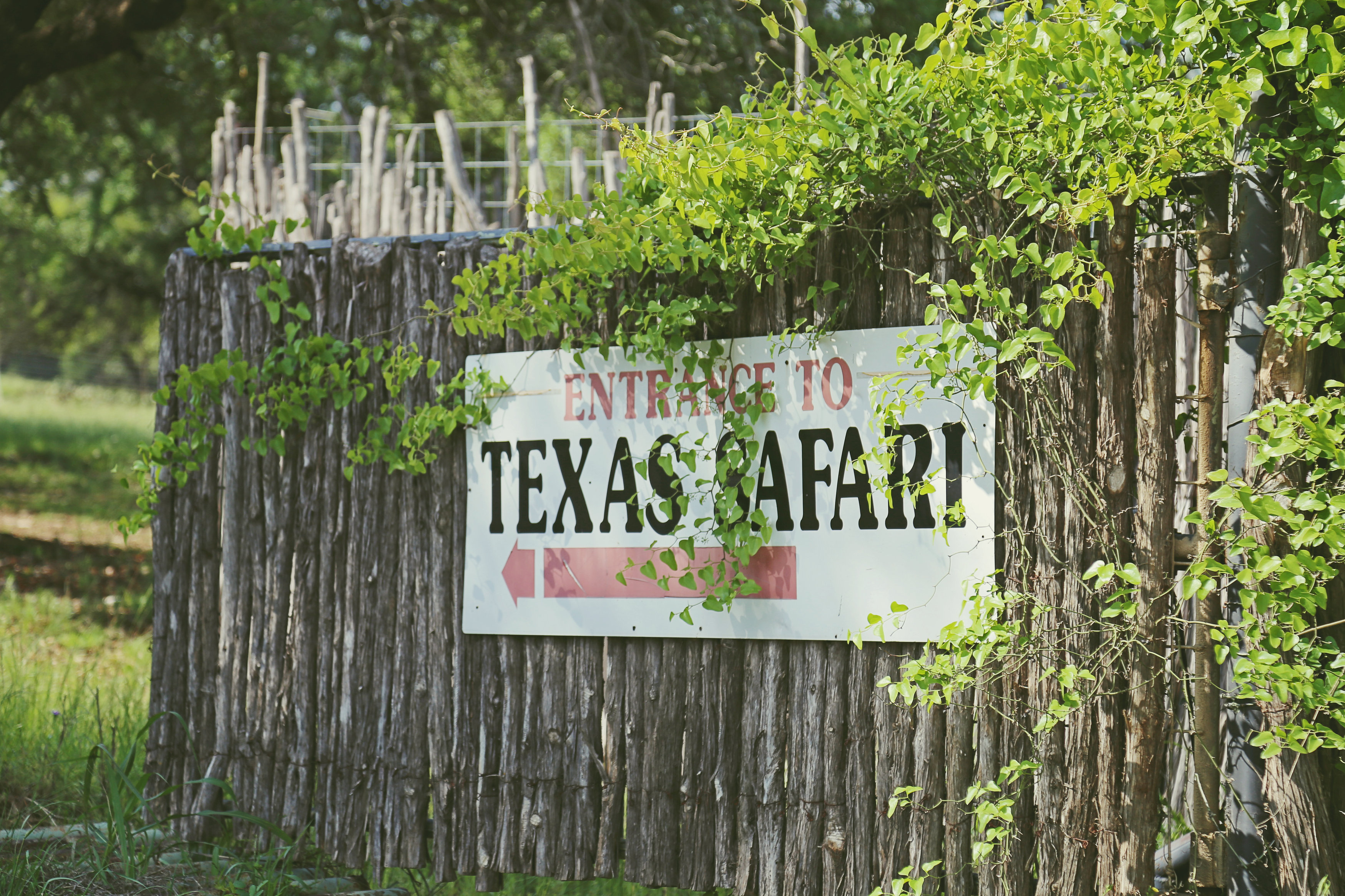 entrance to texas safari