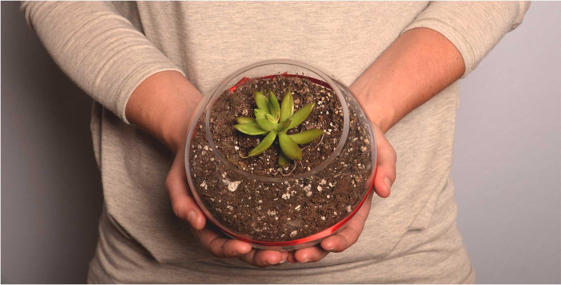 Plante qui représente l'écologie