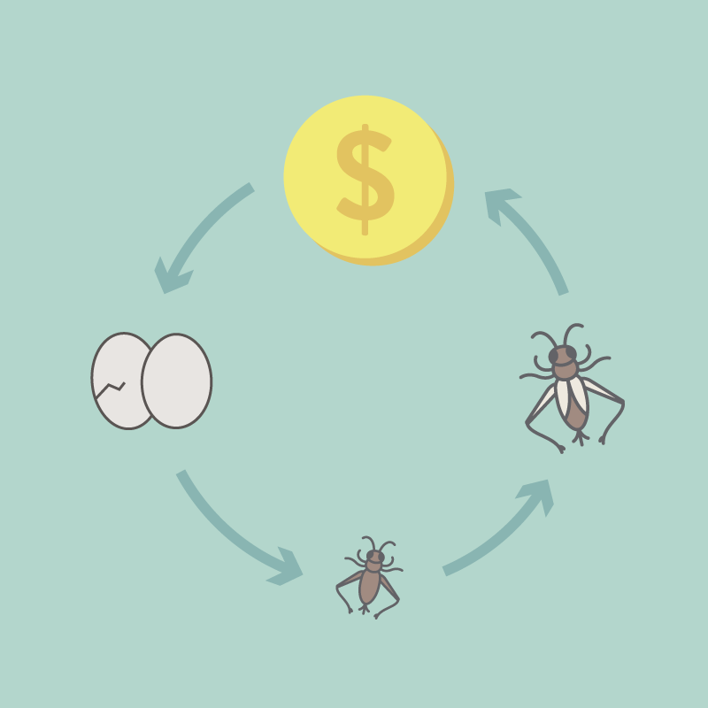 A cycle showing cricket eggs, new hatched crickets, adult crickets and dollar coins (showing how cricket farming can bring you money)