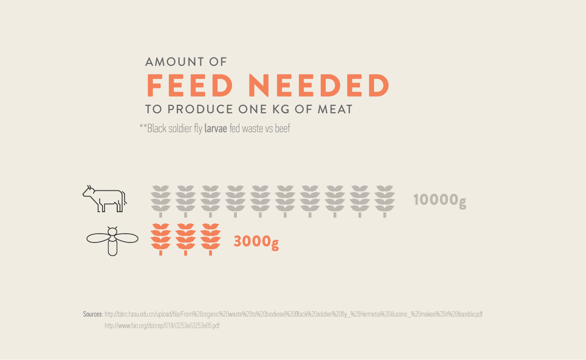 Amount of feed needed to produce one kg of cattle compared to BSFL. Black soldier flies need only one third of the resources
