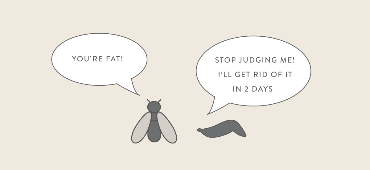 fat insect cartoon