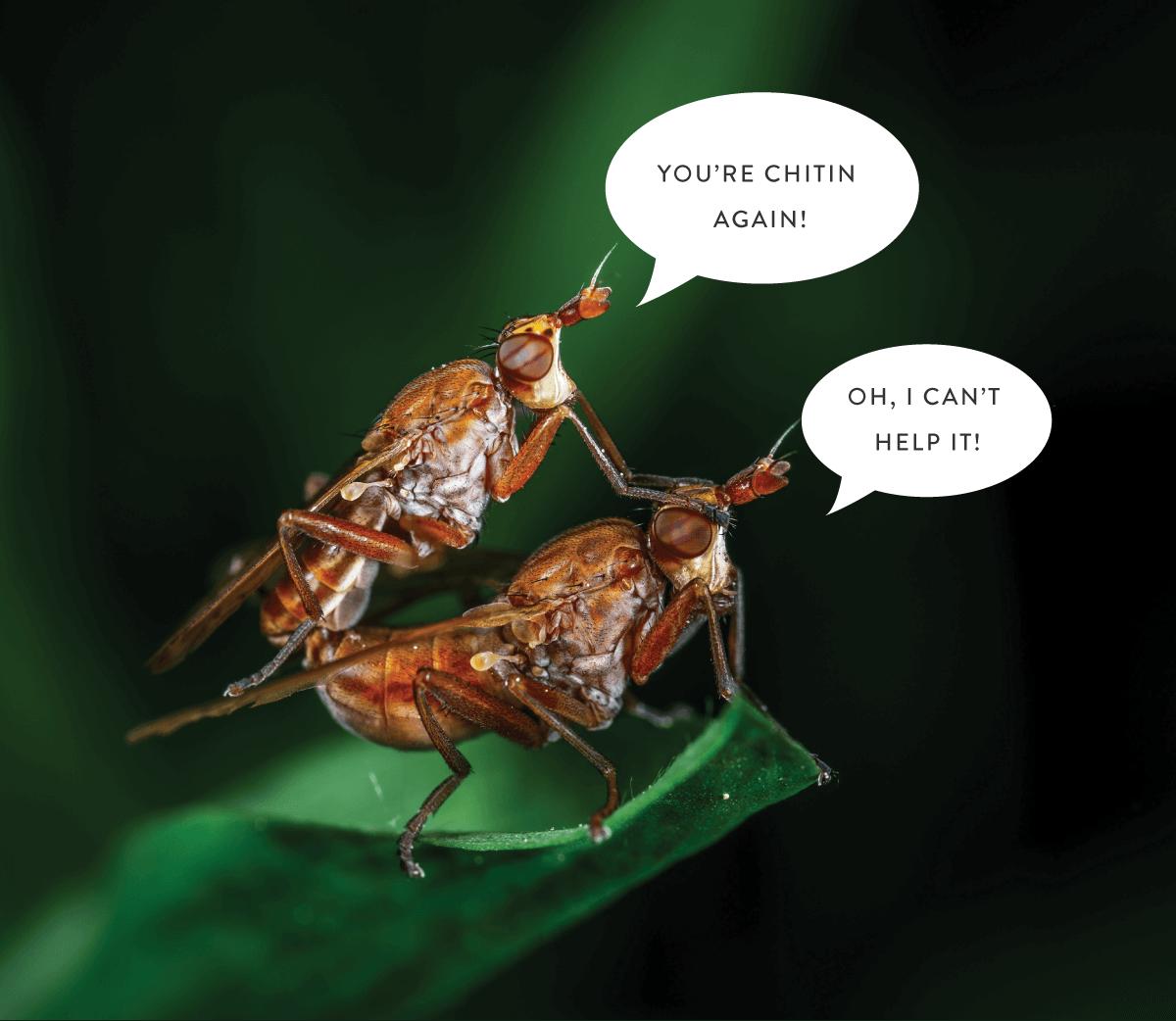 dårlig fluespøk