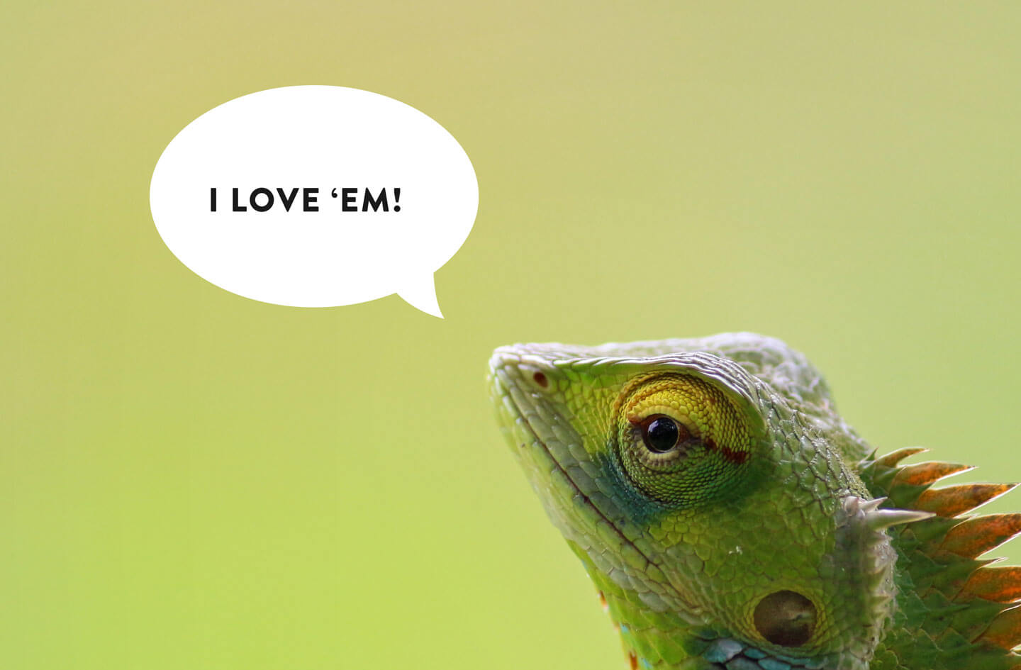 "Lizzard meme- lizzard says ""I love 'em"""