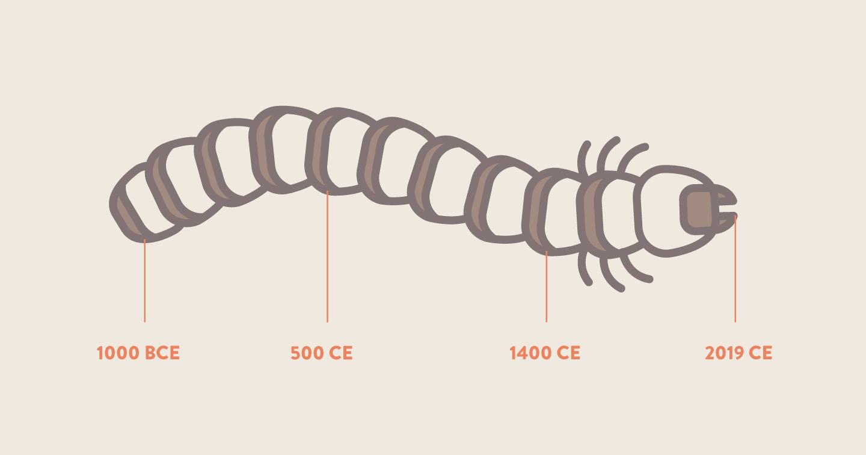 Centipede timeline