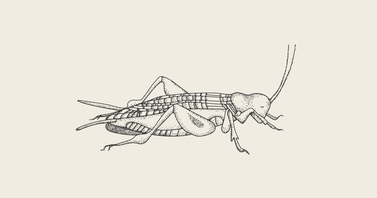 Crickster Cricket Illustration