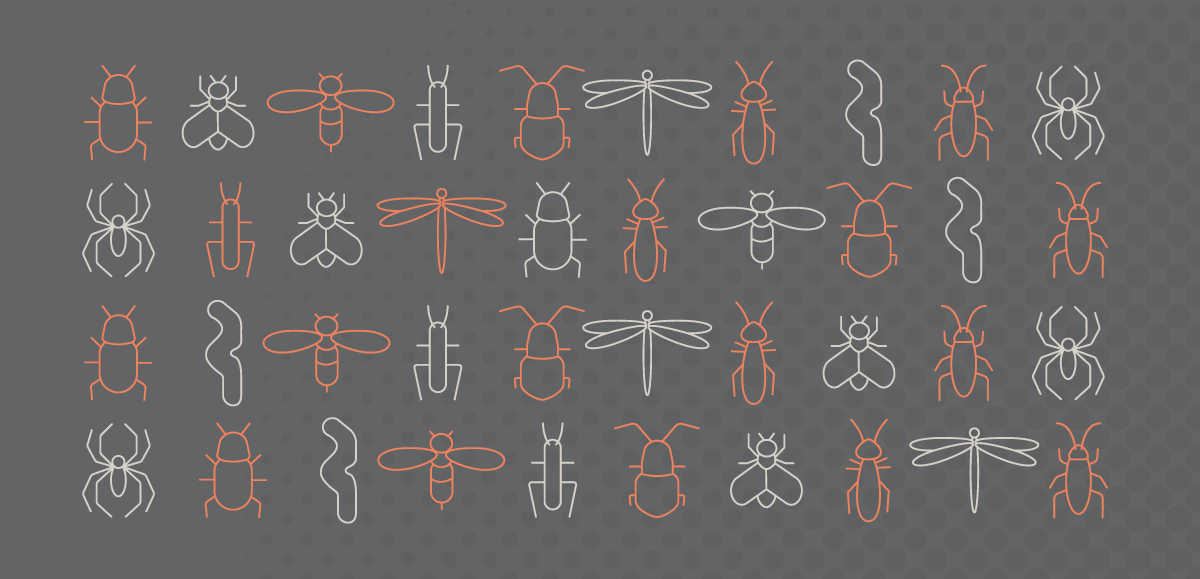 Edible insect (Entomophagy) Pattern