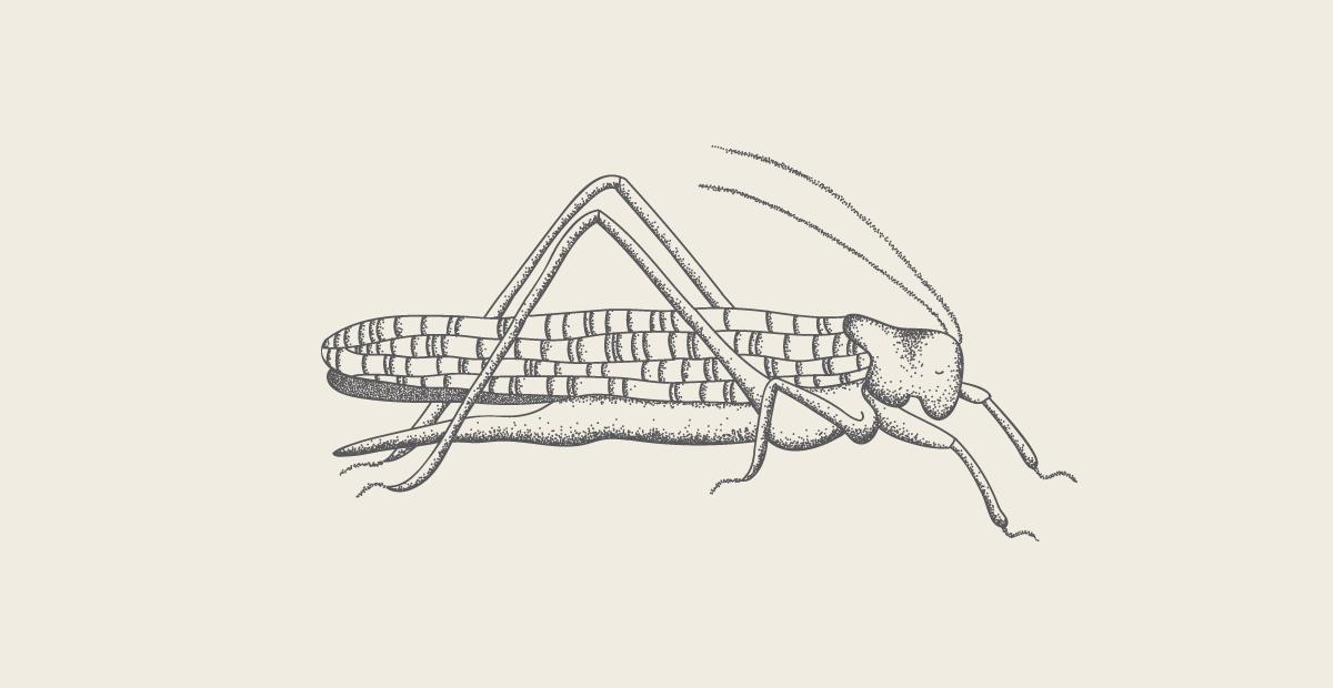 grasshopper cartoon