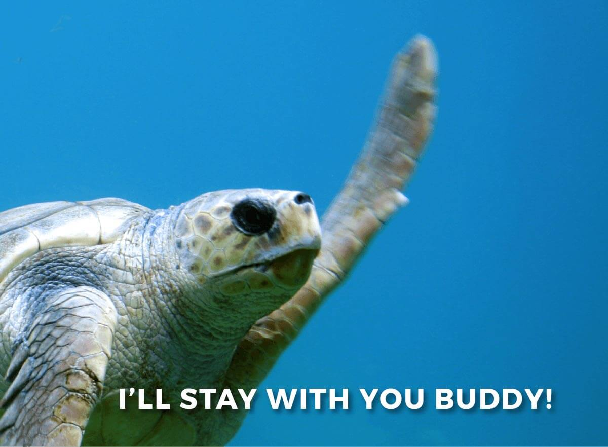 Turtle meme: I'll stay with you buddy