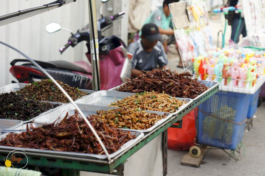 edible insects in chatuchak