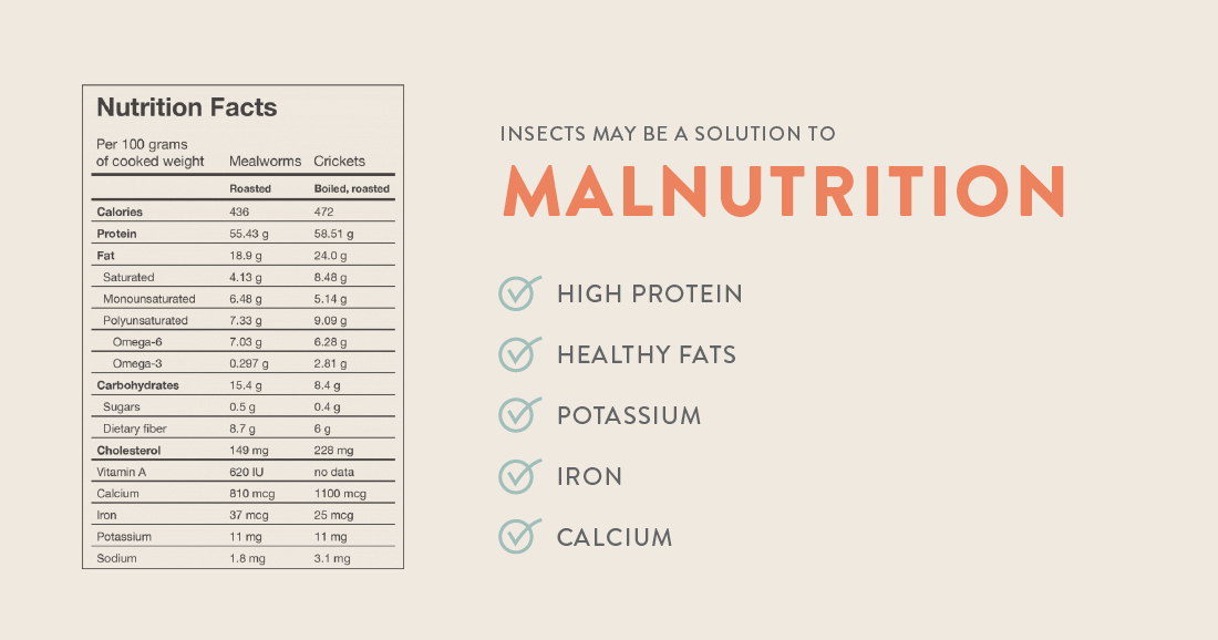 Insects may be a solution to malnutrition
