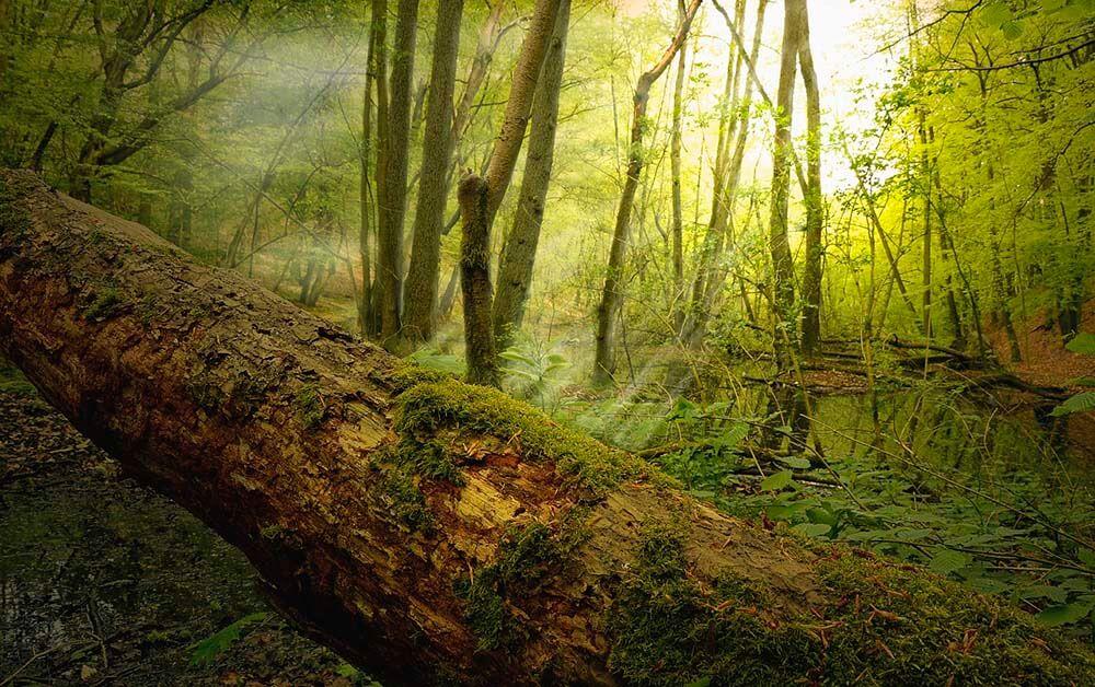 green log
