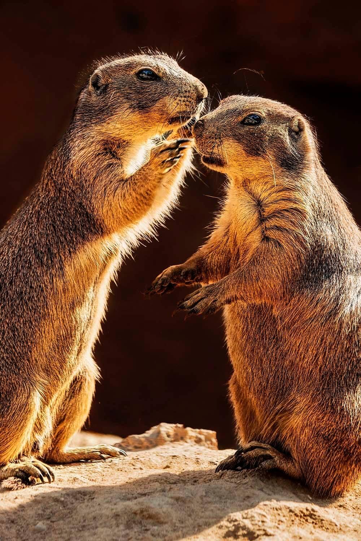 Chipmunks whispering