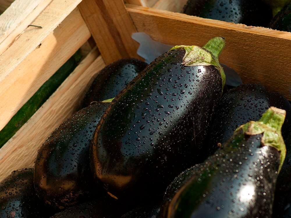 eggplants in box