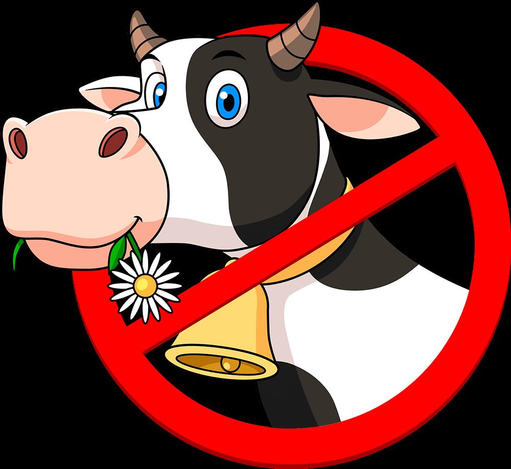No cows