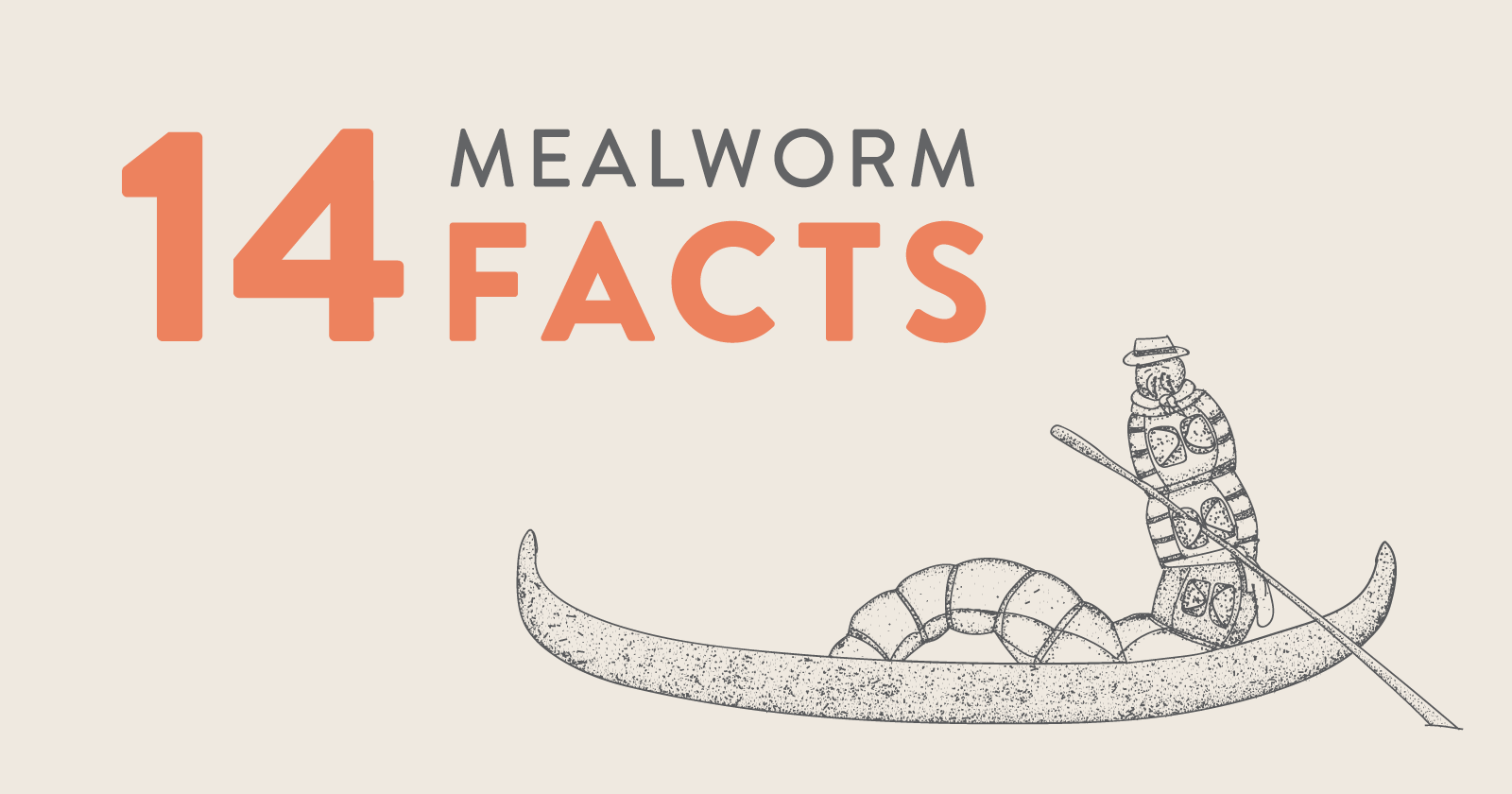 Mealworm on a boat - Illustration