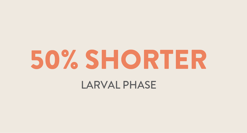 50% Shorter larval phase