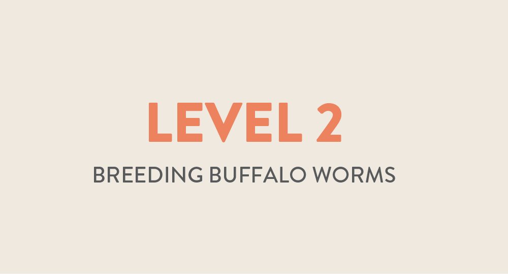 lvl 2 breeding buffalo worms