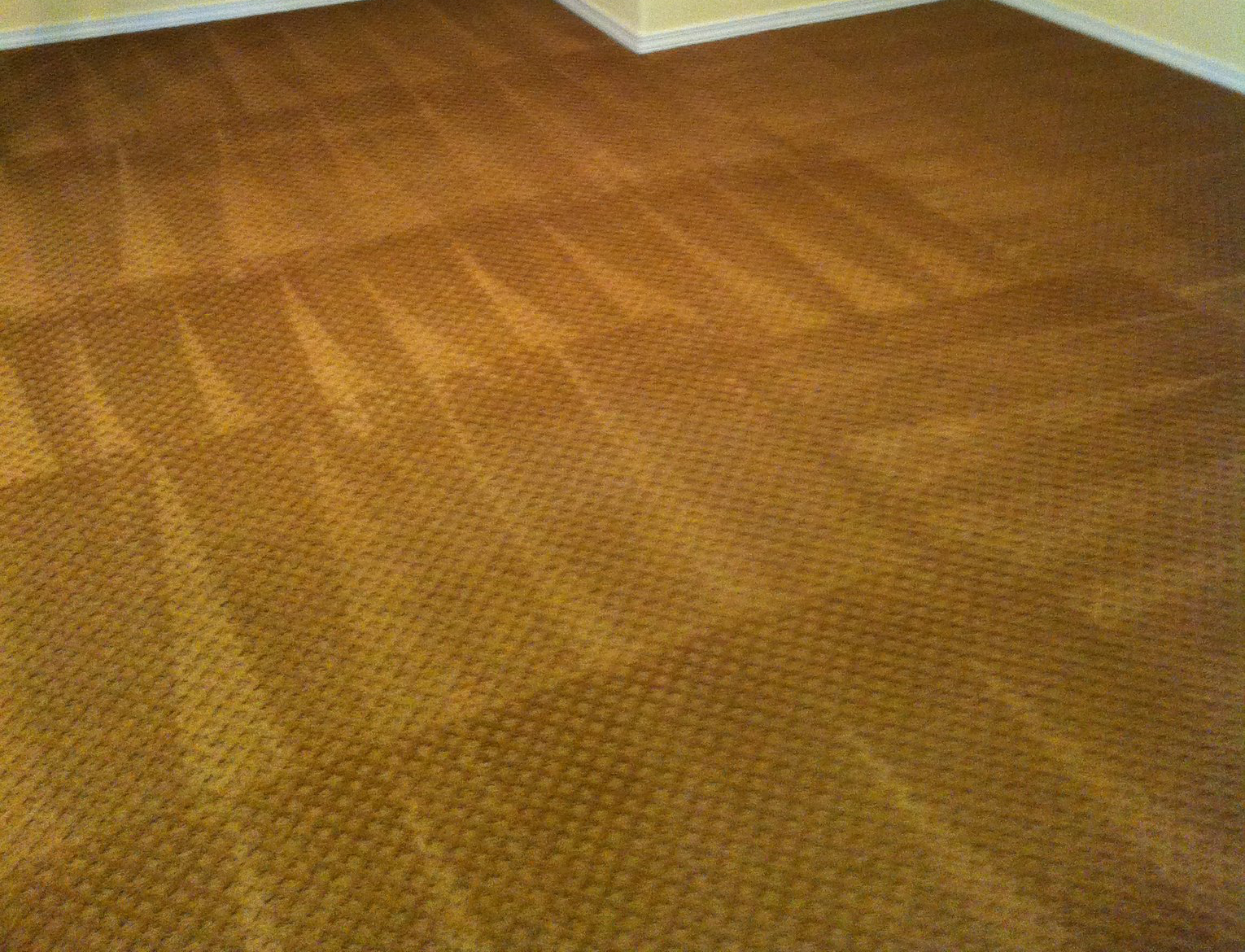 carpet cleaning project 2