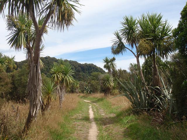 Heaphy Track in Kahurangi National Park of New Zealand