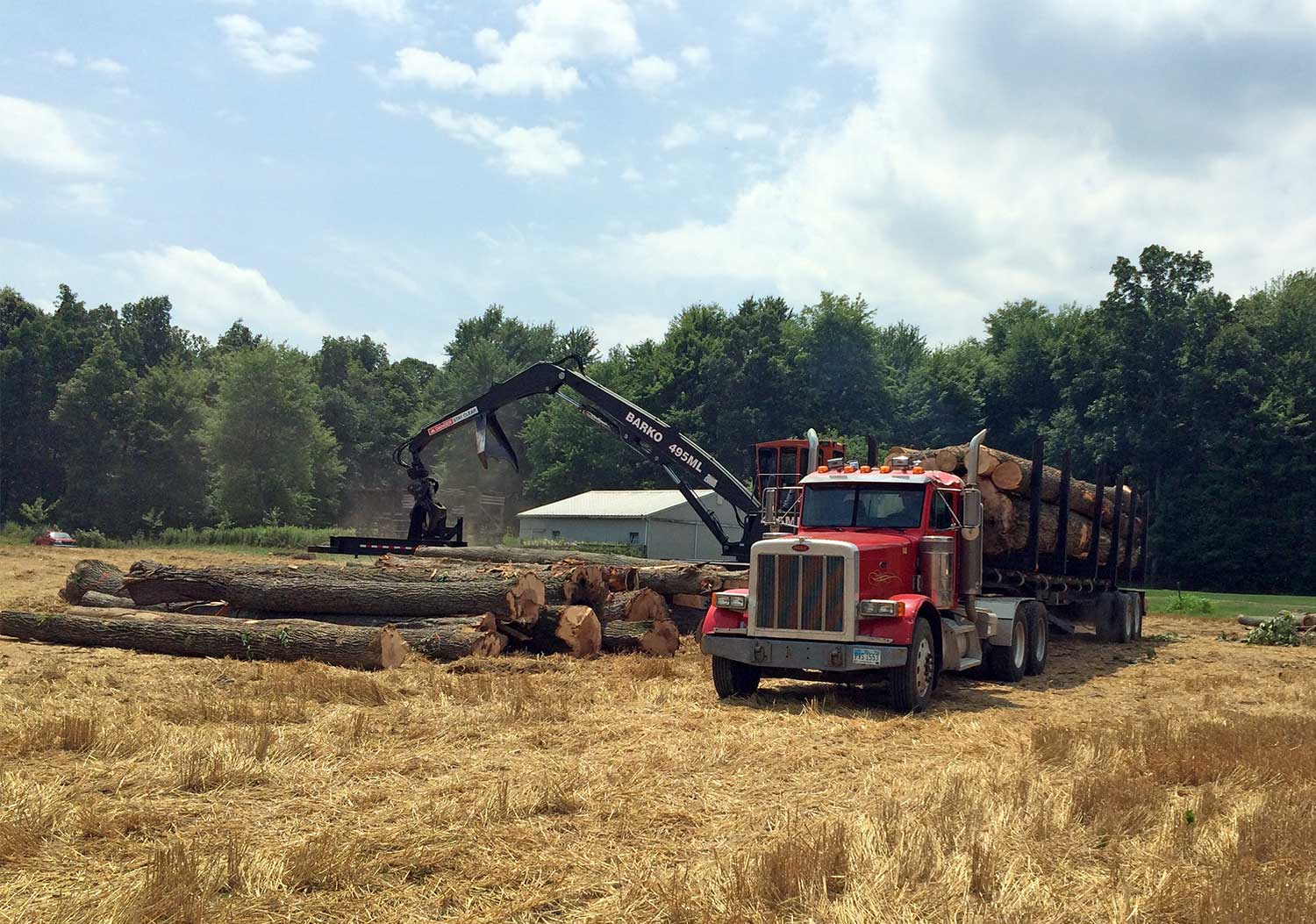Mohawk Lumber Utilizes Responsible Tree Harvesting in Ohio