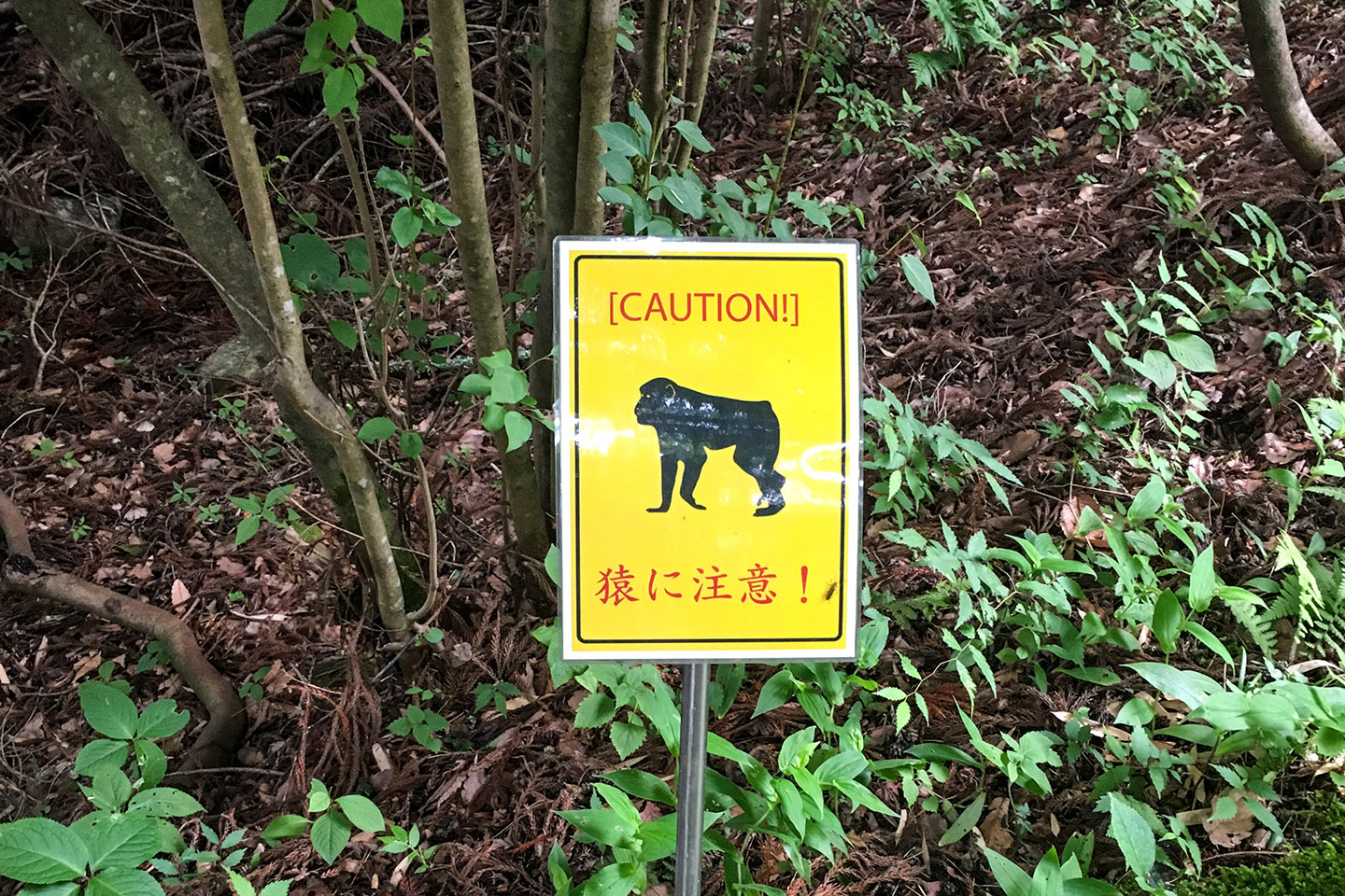 Caution! Monkeys!
