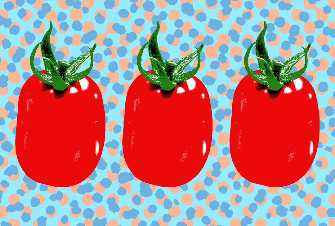 vintage style Roma tomato illustration