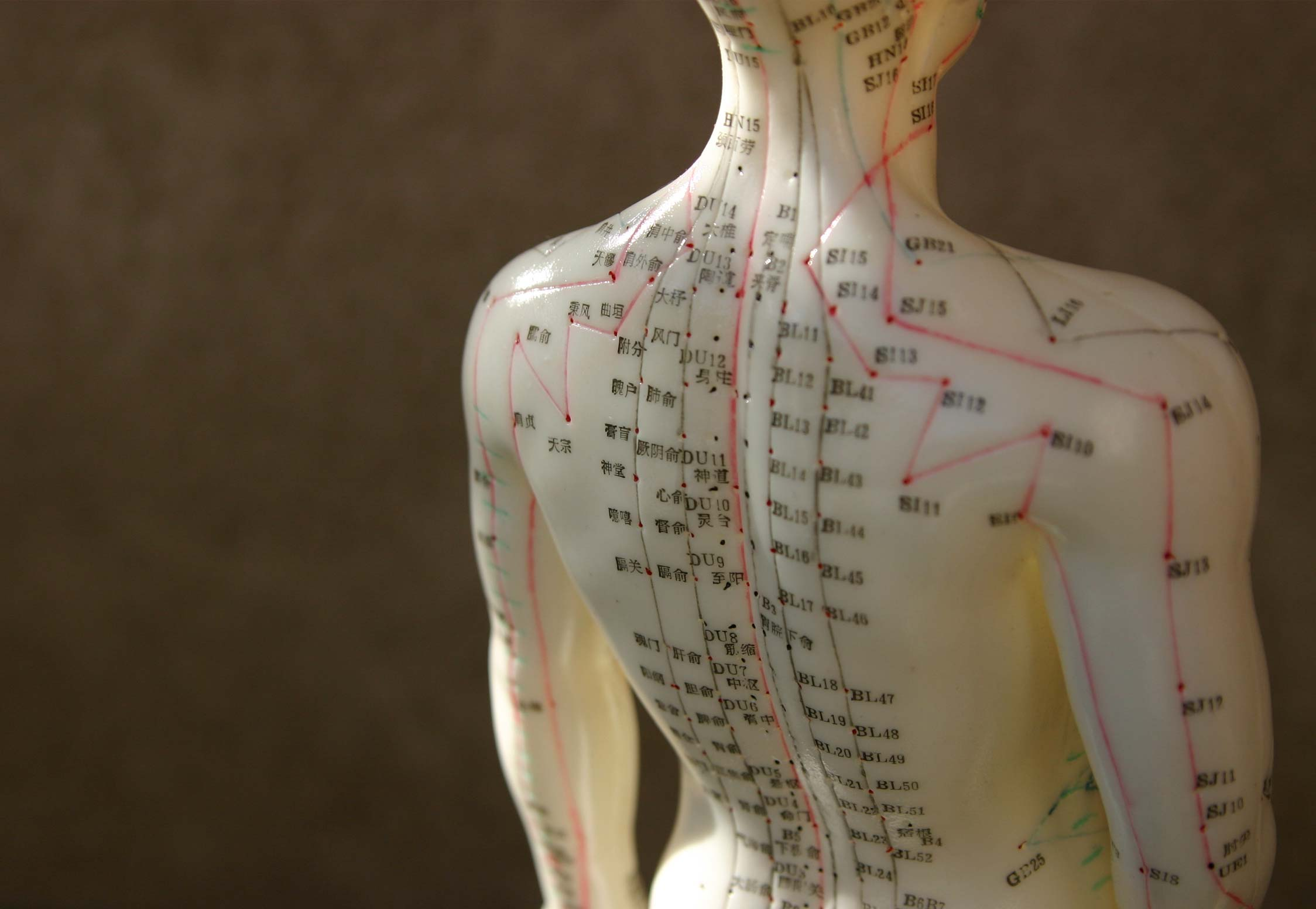Image of Acupuncture points of the body