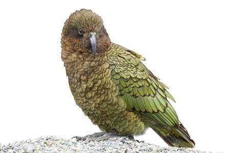 Waikato Zone Kea Sleepover