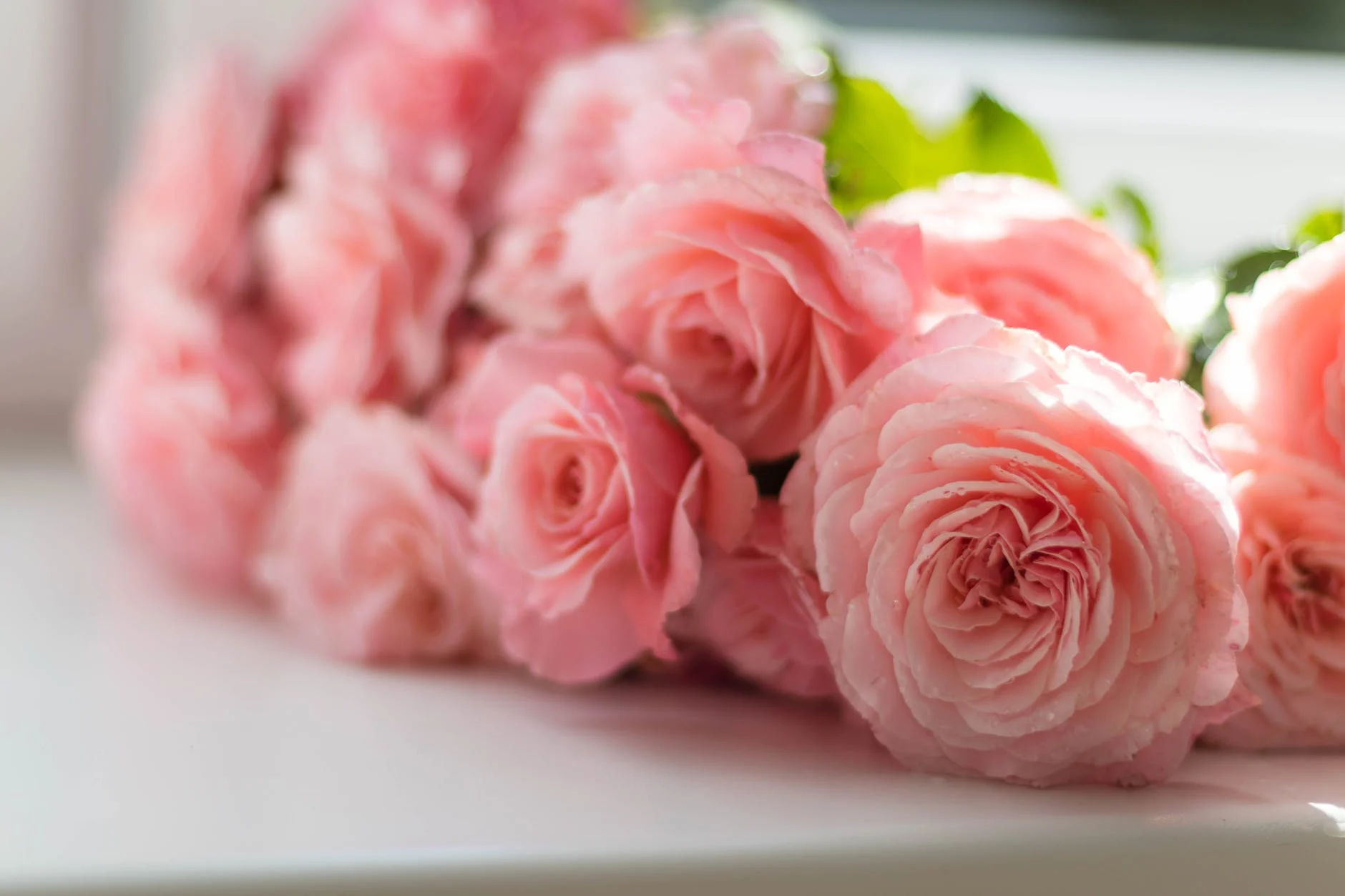 email marketing for florist