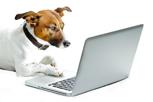 jack russel dog with paw on laptop computer