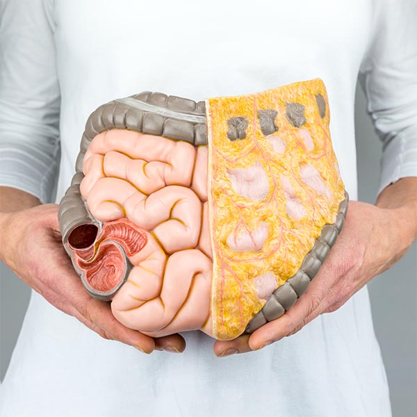 Doctor in white lab coat holding model of GUT system used in integrative medicine schools to identify parts of the gut, health and the microbiome