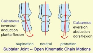 Subtalar Joint – Open Kinematic Chain Motions. Digital Image. Morphopedics. Web. 26 March 2018