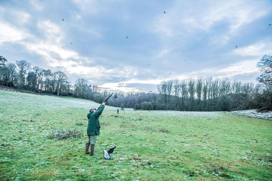 pheasant shooting with David Beardsmore