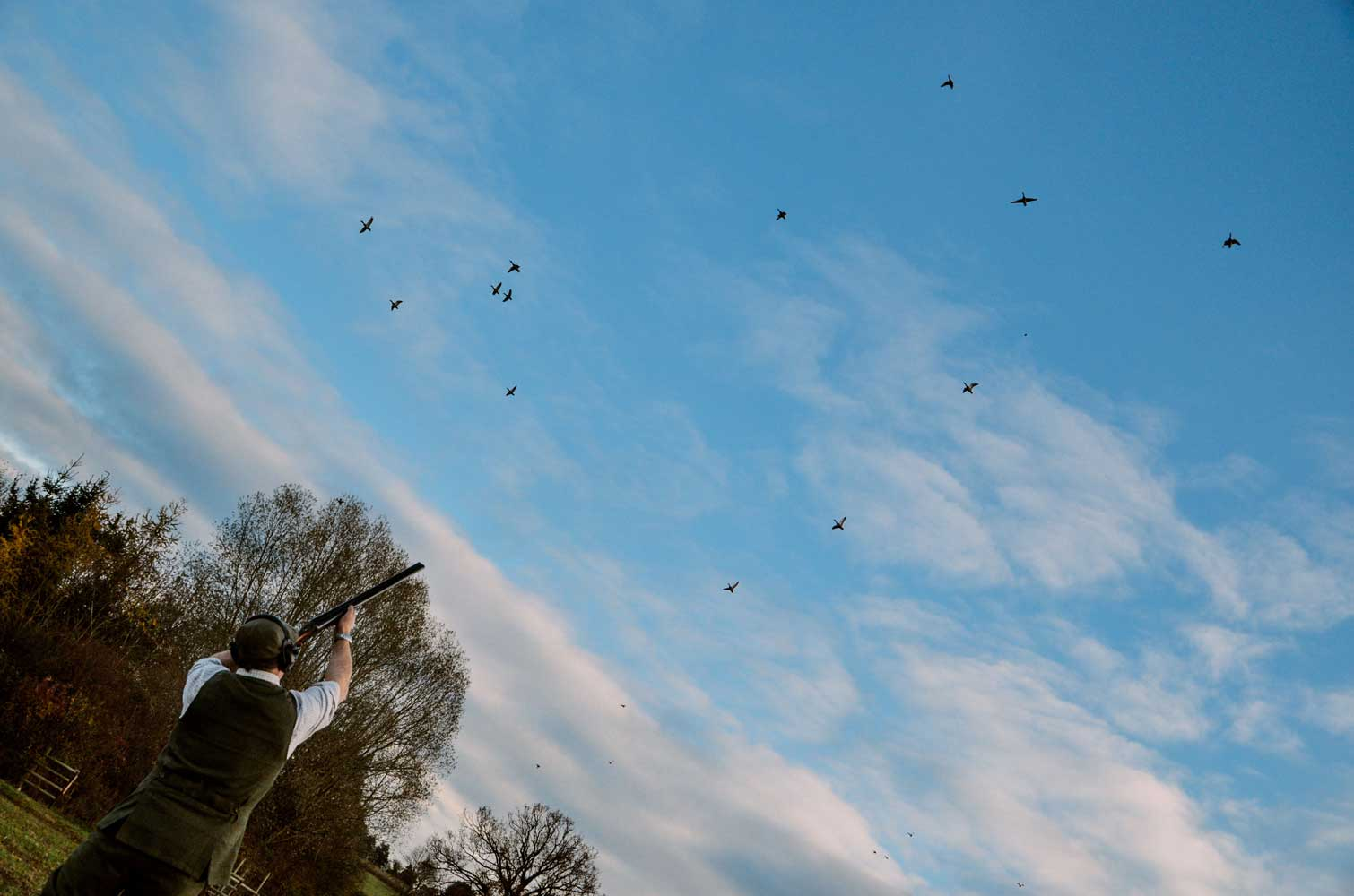 Duck Shooting Season UK | What, When and Why