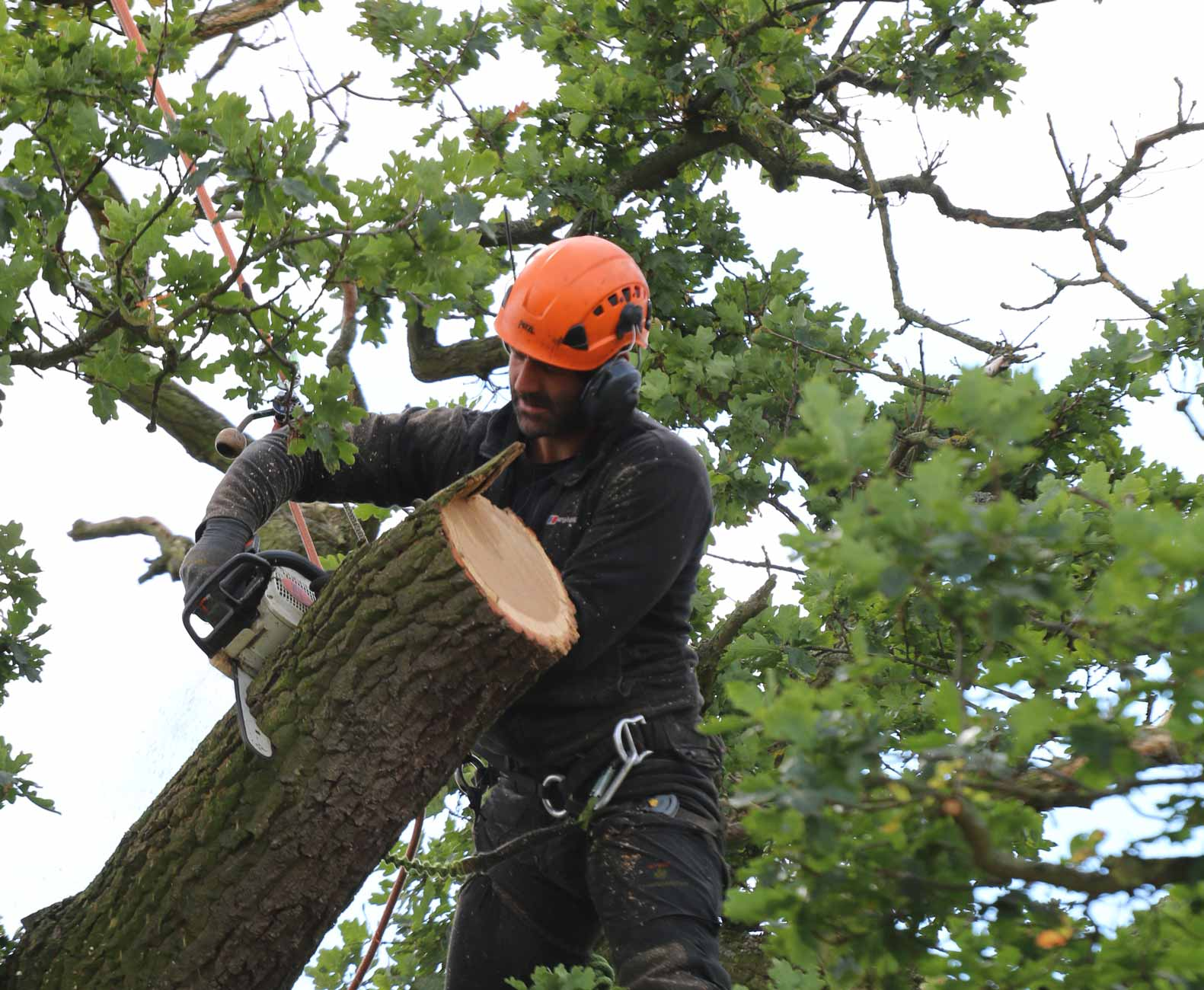 tree surgeon wolverhampton