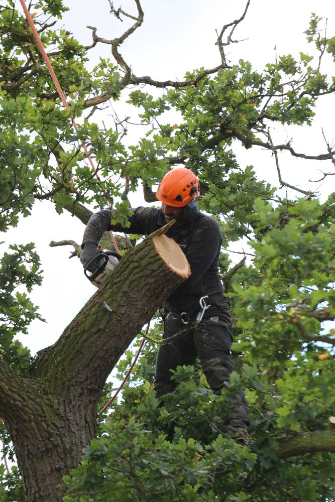 Tree removal and felling
