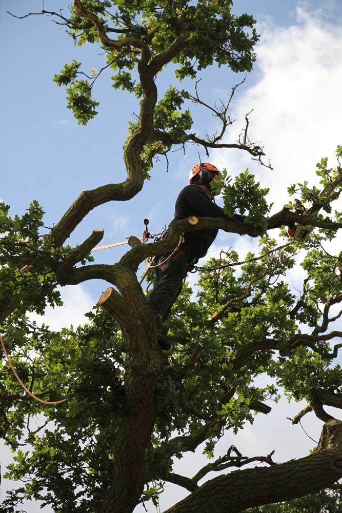Wolverhampton tree services